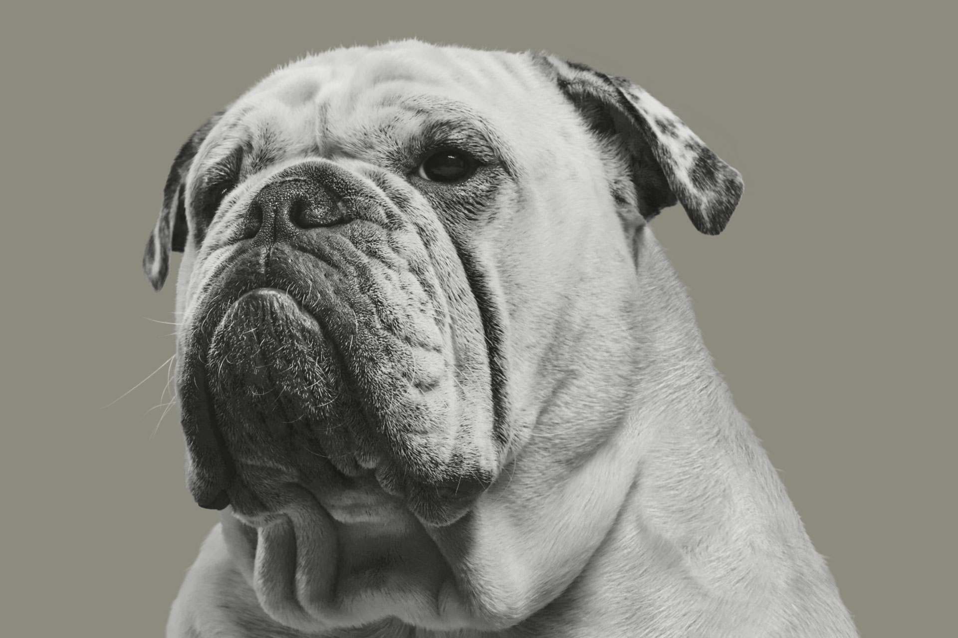 Bulldog-serien